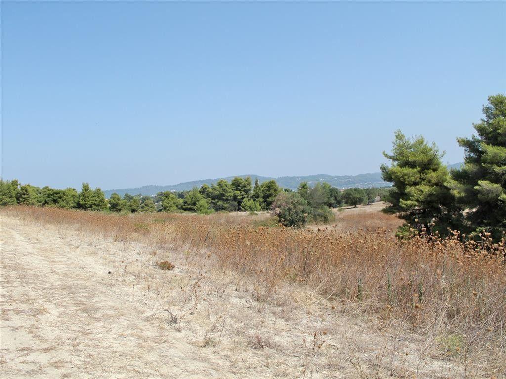 Земля Халкидики-Кассандра, Греция, 12000 сот. - фото 1