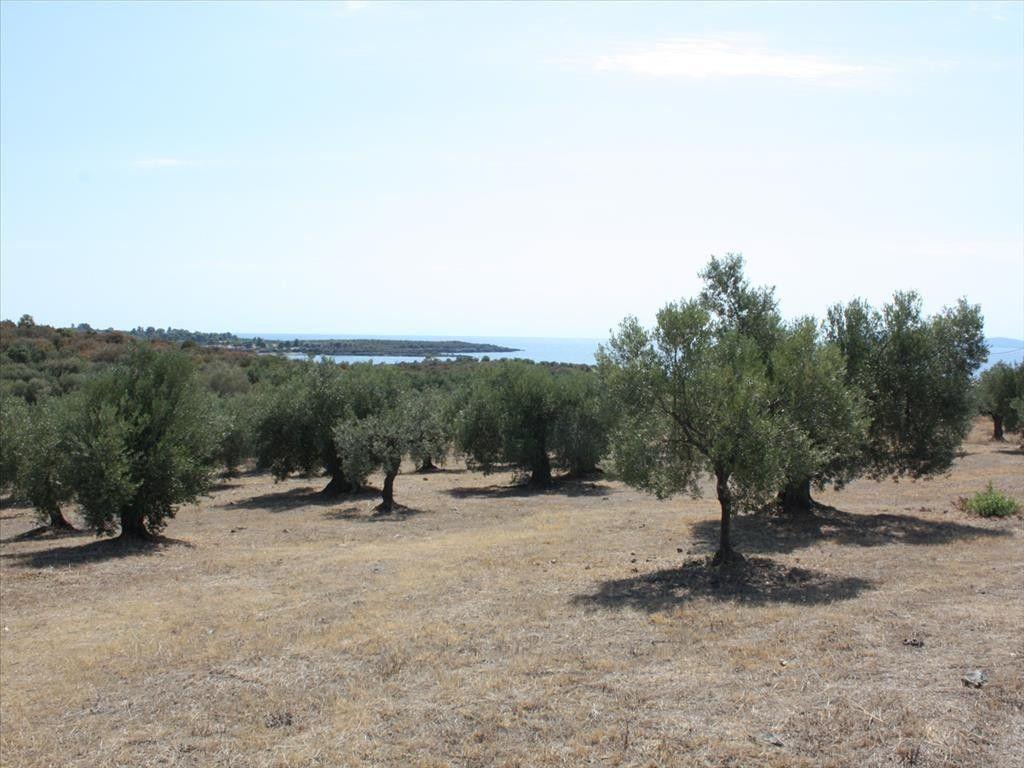 Земля Халкидики-Ситония, Греция, 4070 сот. - фото 1