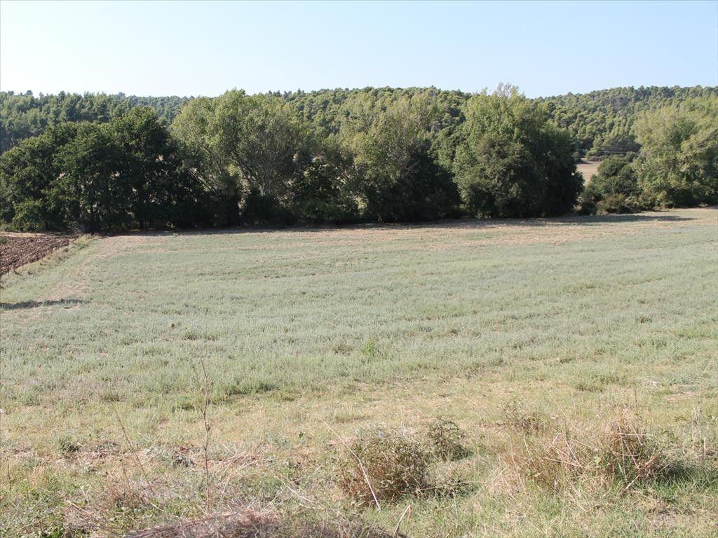 Земля Халкидики-Кассандра, Греция, 13500 сот. - фото 1