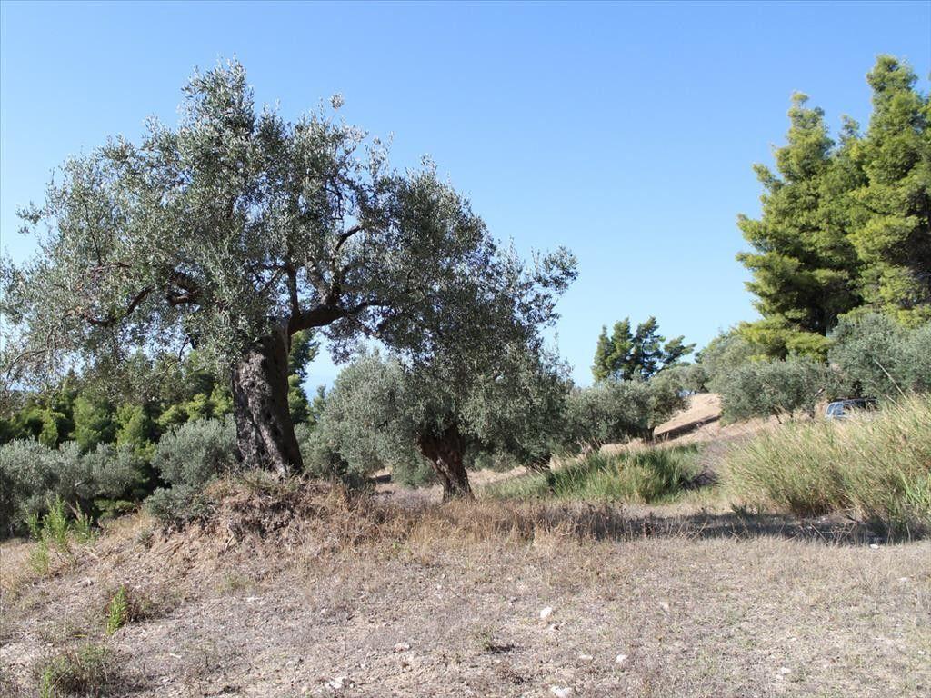 Земля Халкидики-Кассандра, Греция, 4840 сот. - фото 1
