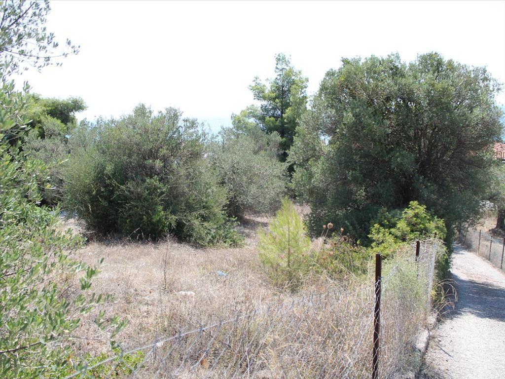 Земля Халкидики-Кассандра, Греция, 1120 сот. - фото 1