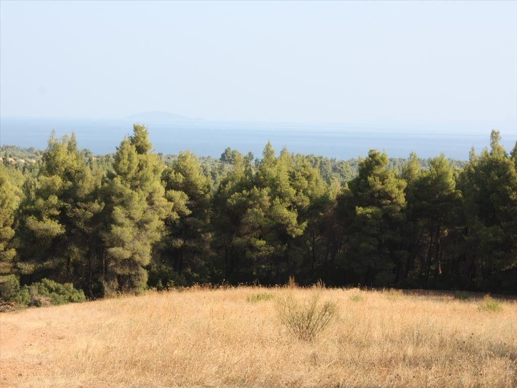 Земля Халкидики-Ситония, Греция, 13700 сот. - фото 1