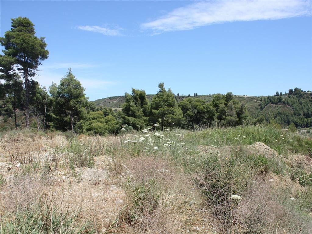 Земля Халкидики-Кассандра, Греция, 4900 сот. - фото 1