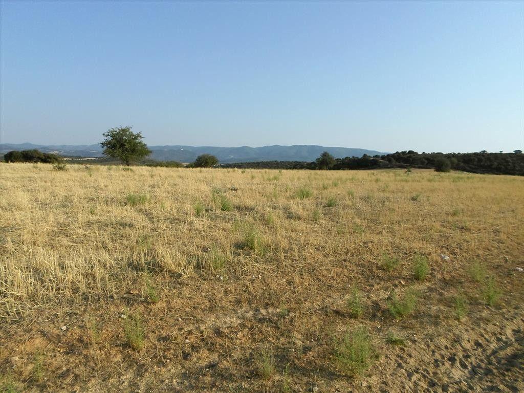 Земля Халкидики-Афон, Греция, 8500 м2 - фото 1