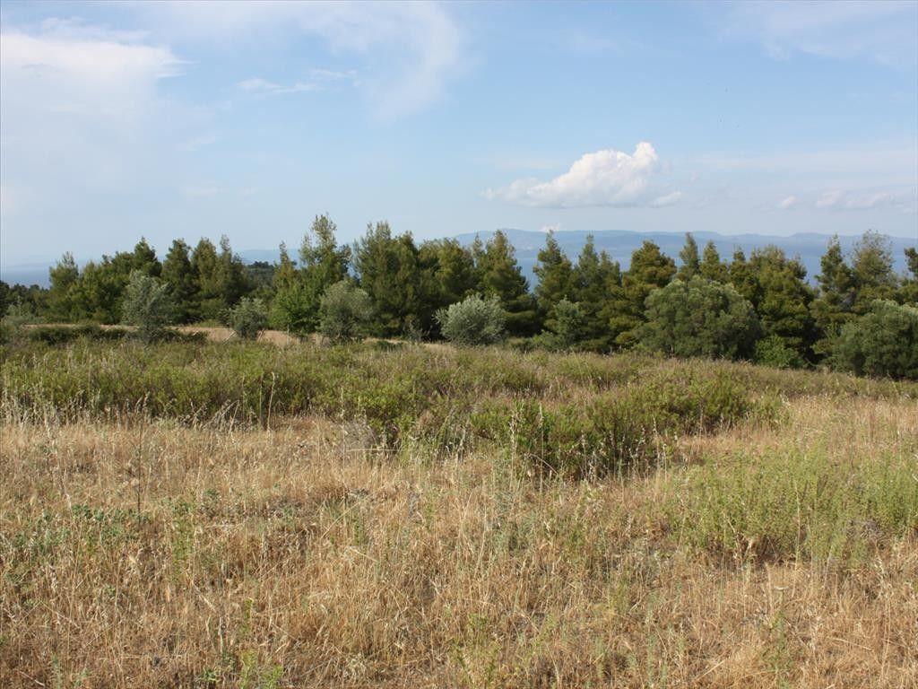 Земля Халкидики-Кассандра, Греция, 1145 м2 - фото 1