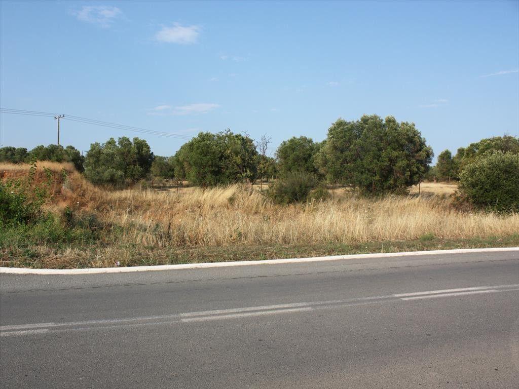 Земля Халкидики-Ситония, Греция, 605 сот. - фото 1