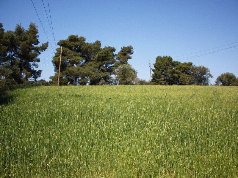 Земля Халкидики-Кассандра, Греция, 22925 сот. - фото 1