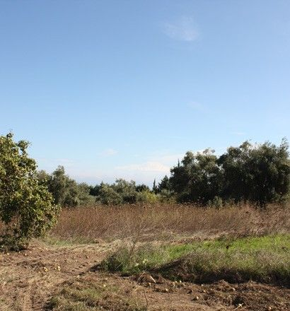 Земля Халкидики-Кассандра, Греция, 4286 сот. - фото 1