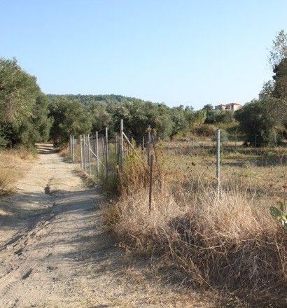 Земля Халкидики-Кассандра, Греция, 3026 сот. - фото 1