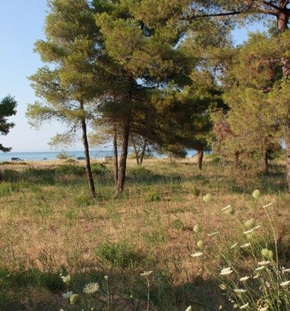 Земля Халкидики-Кассандра, Греция, 10700 сот. - фото 1