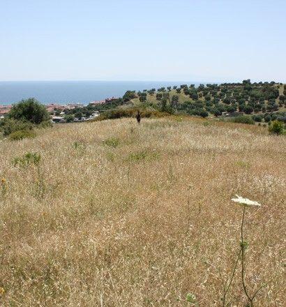Земля Халкидики-Кассандра, Греция, 8000 м2 - фото 1