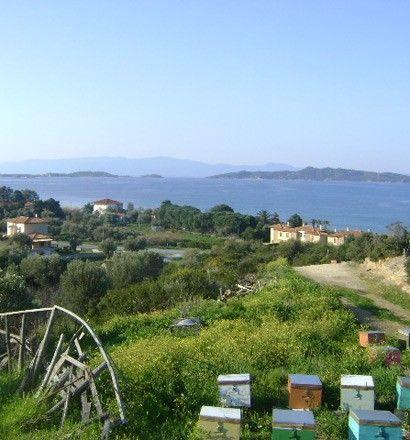 Земля Халкидики-Афон, Греция, 11600 м2 - фото 1