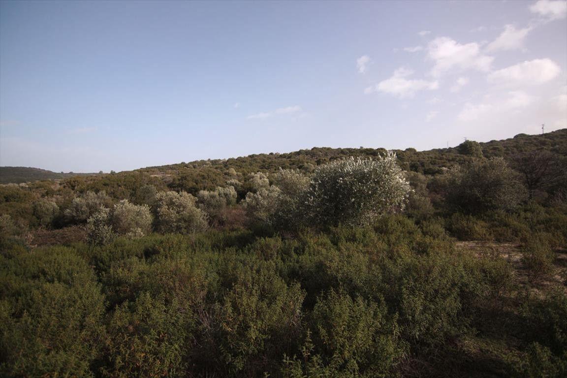 Земля Халкидики-Афон, Греция, 10000 сот. - фото 1