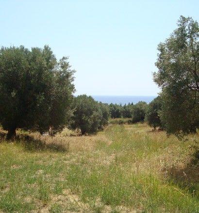 Земля Халкидики-Кассандра, Греция, 18000 сот. - фото 1
