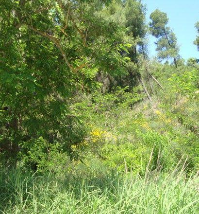 Земля Халкидики-Кассандра, Греция, 3115 сот. - фото 1