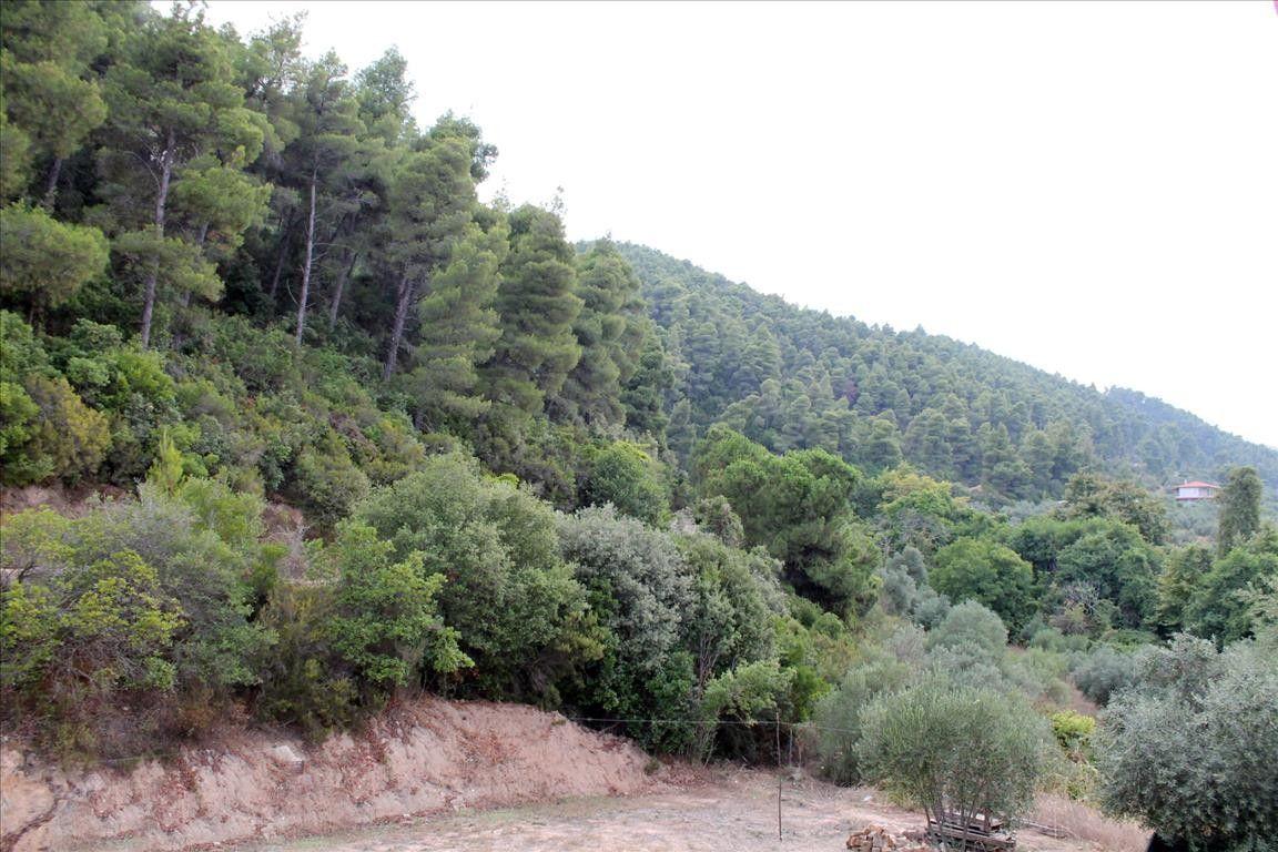 Таунхаус Халкидики-Ситония, Греция, 112 м2 - фото 1