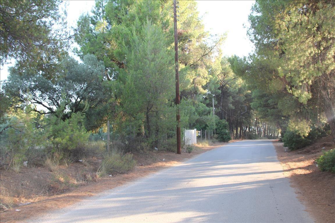 Земля Халкидики-Ситония, Греция, 3600 сот. - фото 1