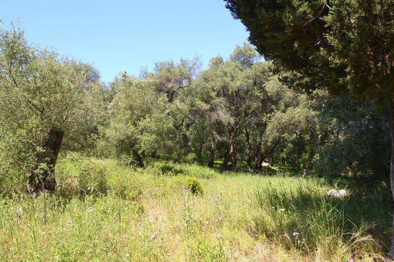 Земля на Керкире, Греция, 5152 м2 - фото 1