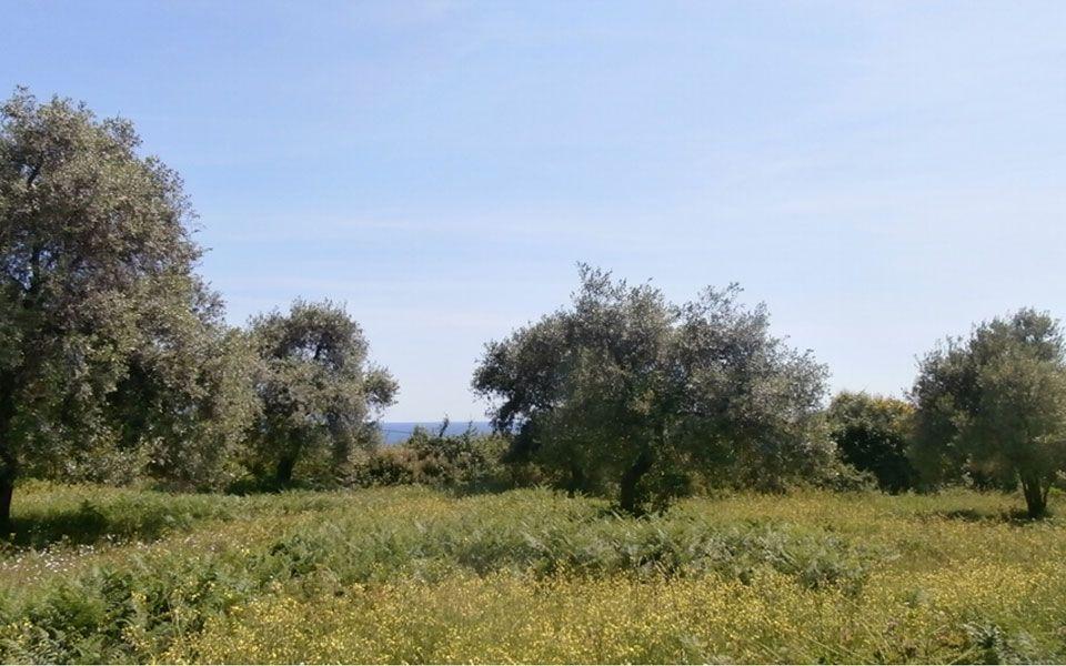 Земля на Тасосе, Греция, 4258 м2 - фото 1