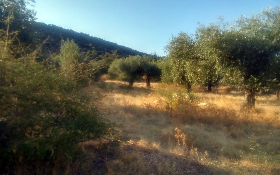 Земля на Тасосе, Греция, 4050 м2 - фото 1