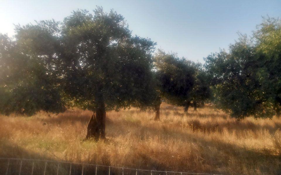 Земля на Тасосе, Греция, 4250 м2 - фото 1