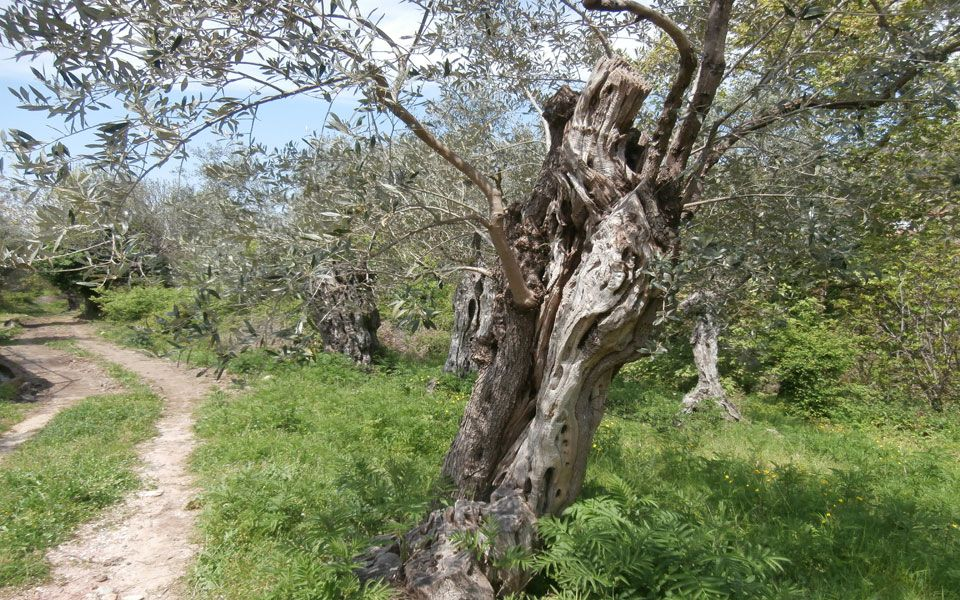 Земля на Тасосе, Греция, 430 м2 - фото 1