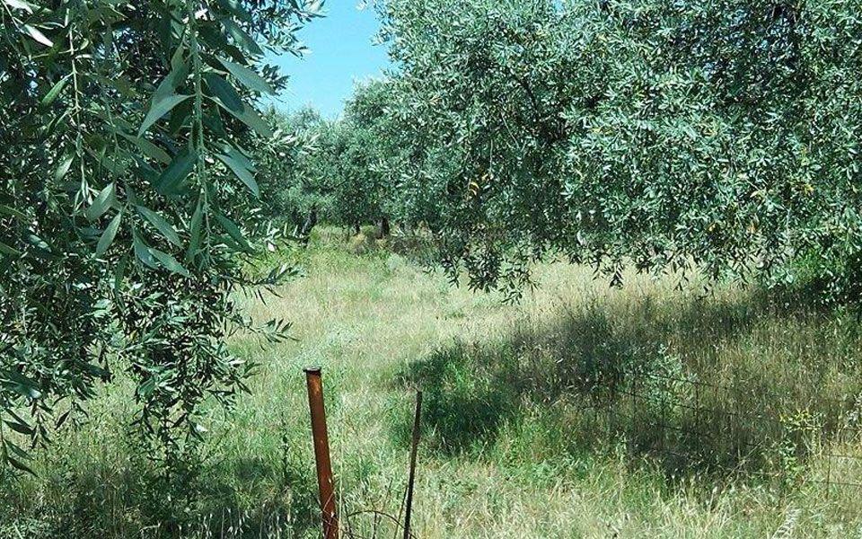 Земля на Тасосе, Греция, 380 м2 - фото 1