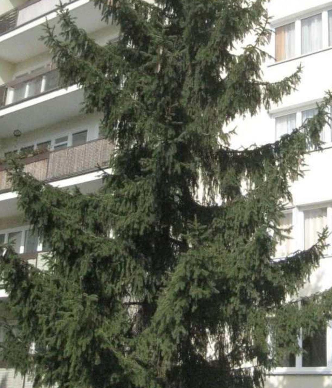 Квартира в Берлине, Германия, 52.3 м2 - фото 1