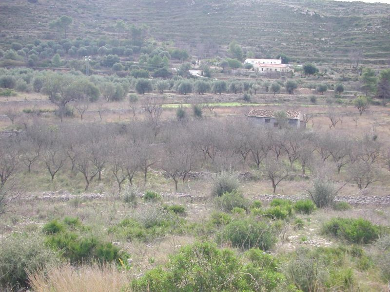 Земля в Алькалали, Испания, 10194 м2 - фото 1