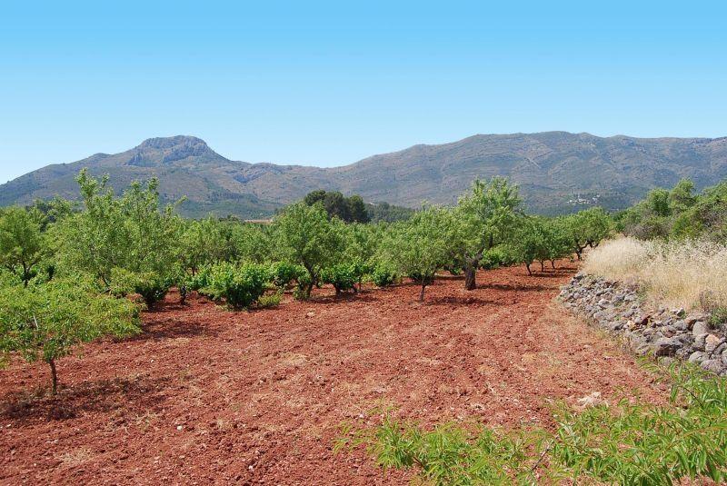 Земельный участок в испании цены