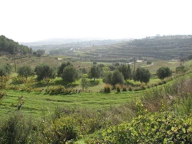 Земля в Теуладе, Испания, 11400 м2 - фото 1