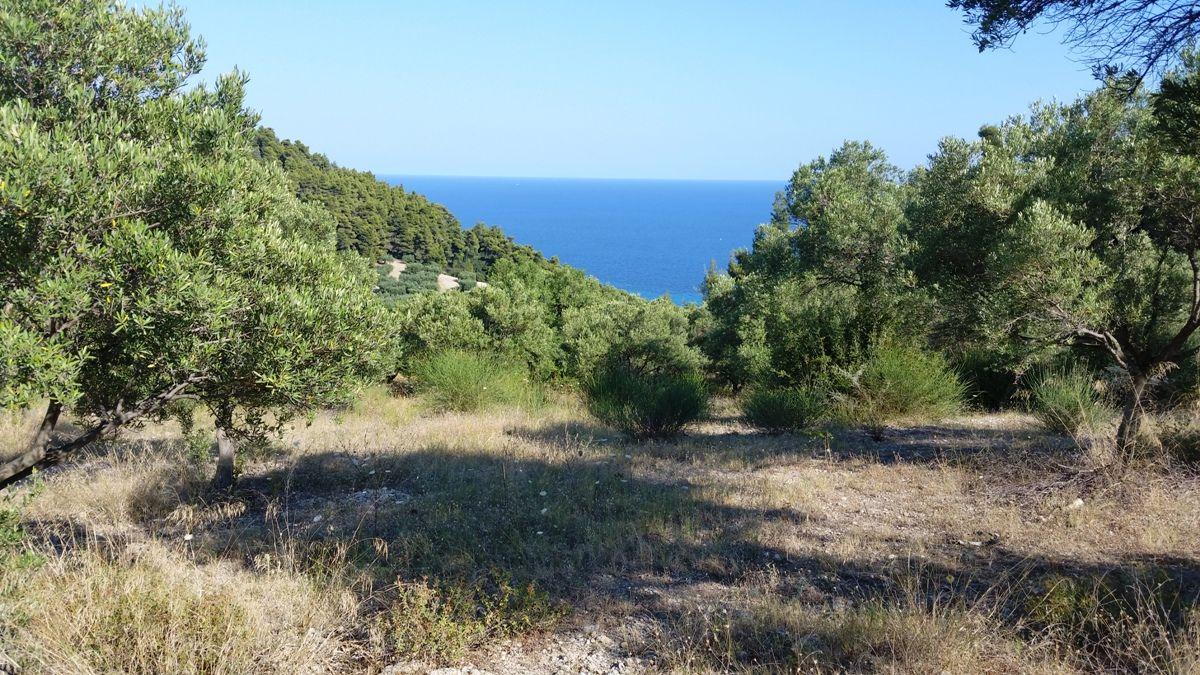 Земля на Кассандре, Греция, 9100 м2 - фото 1