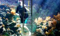 Израильтянин построил в гостиной аквариум на 30 000 литров