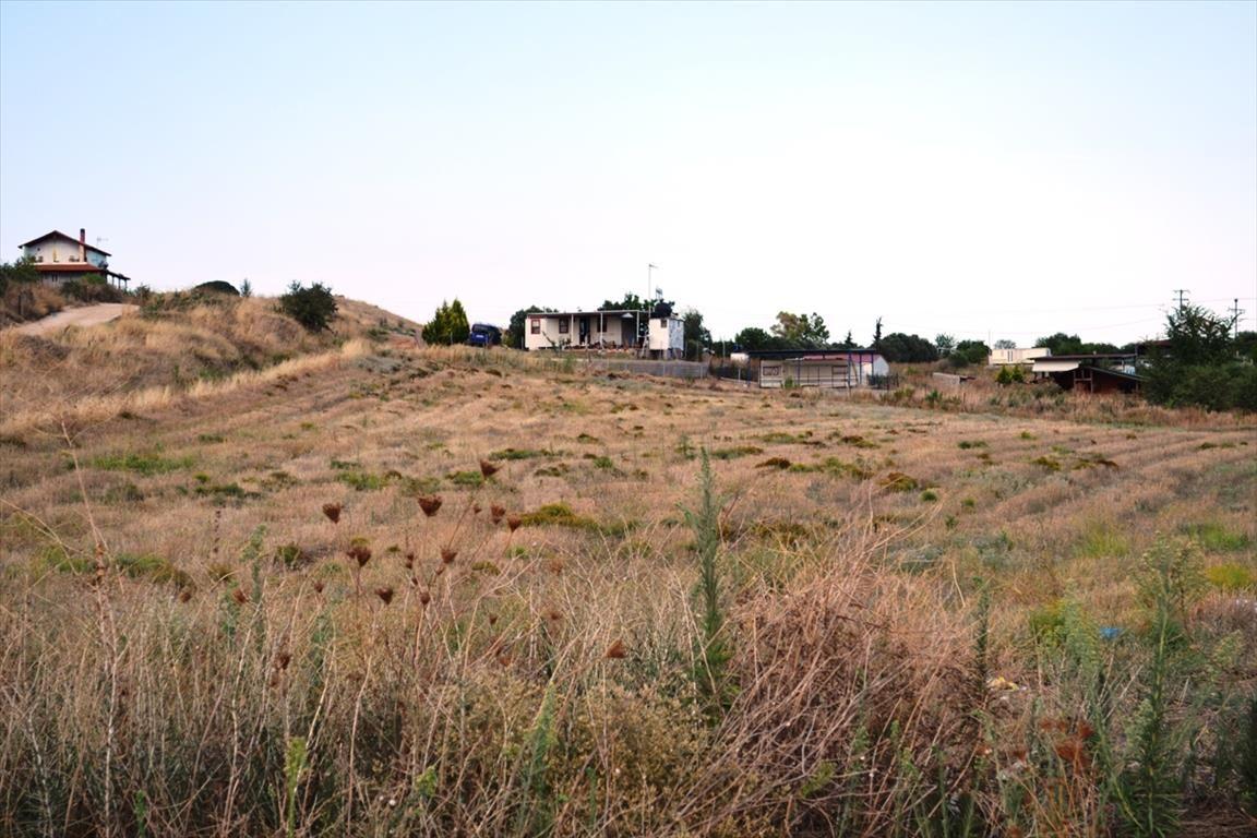Земля в Сани, Греция, 4200 м2 - фото 1