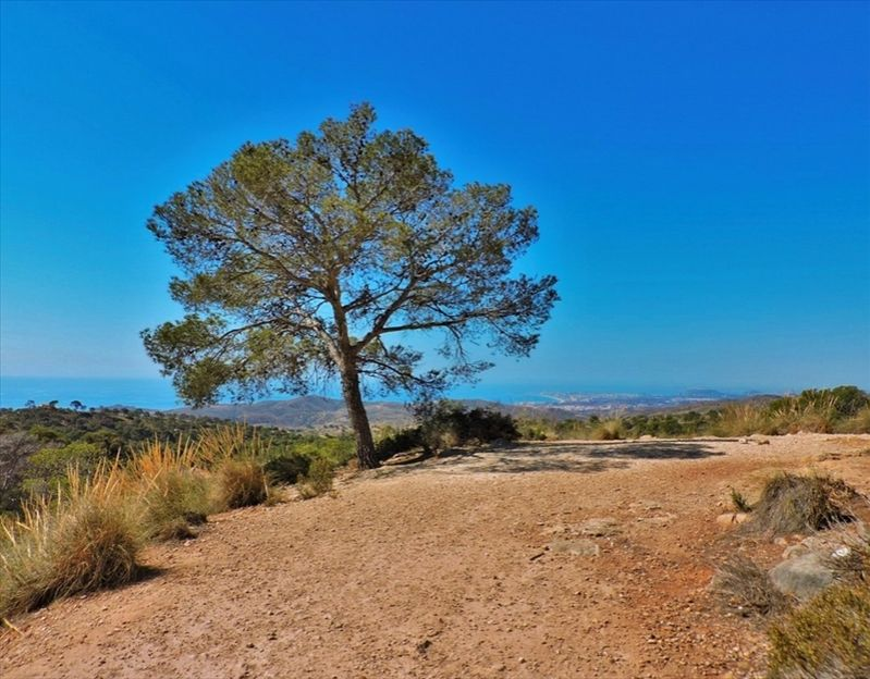 Вилла в Аликанте, Испания, 243 сот. - фото 1