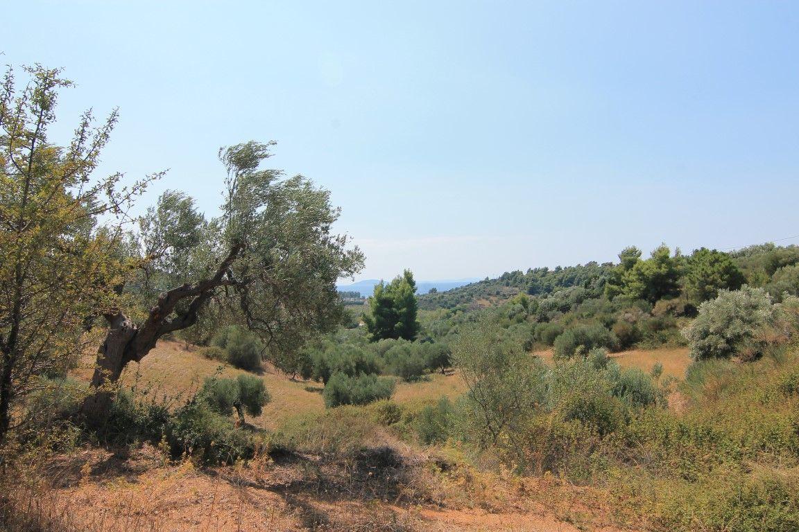 Земля в Ситонии, Греция, 4100 м2 - фото 1