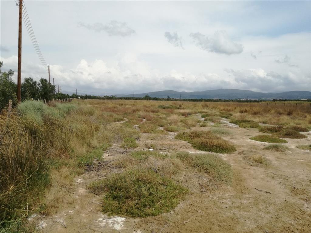 Земля в Халкидики, Греция, 12653 м2 - фото 1