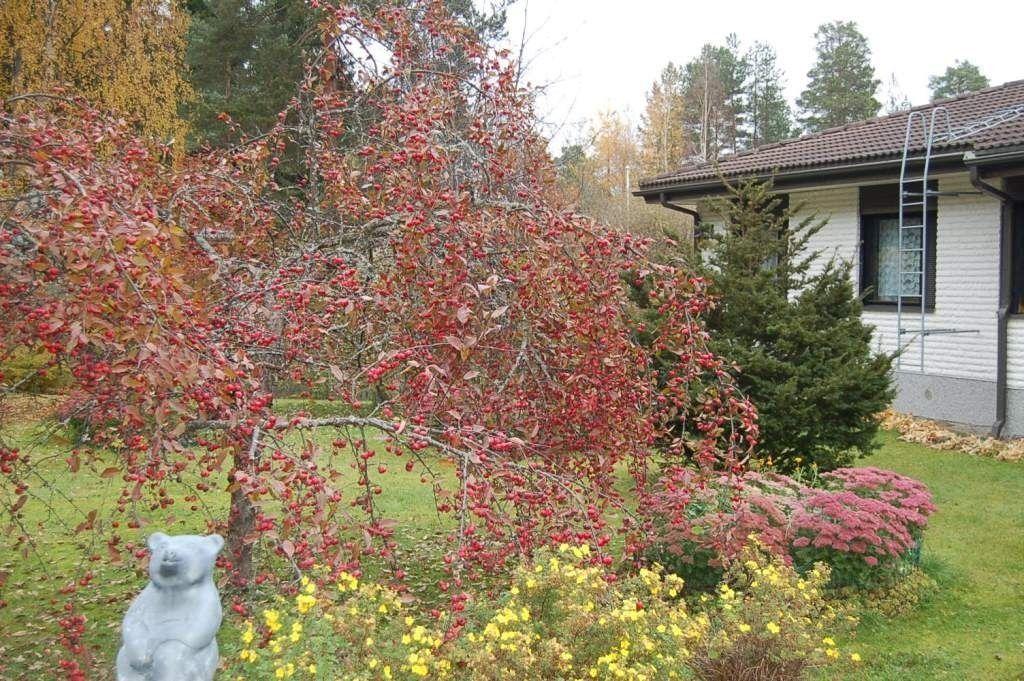 Дом в Миккели, Финляндия, 3350 м2 - фото 1
