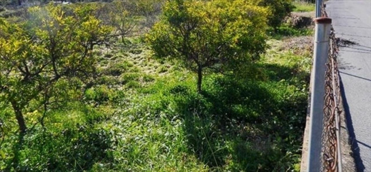 Земля в Аликанте, Испания, 11000 сот. - фото 1