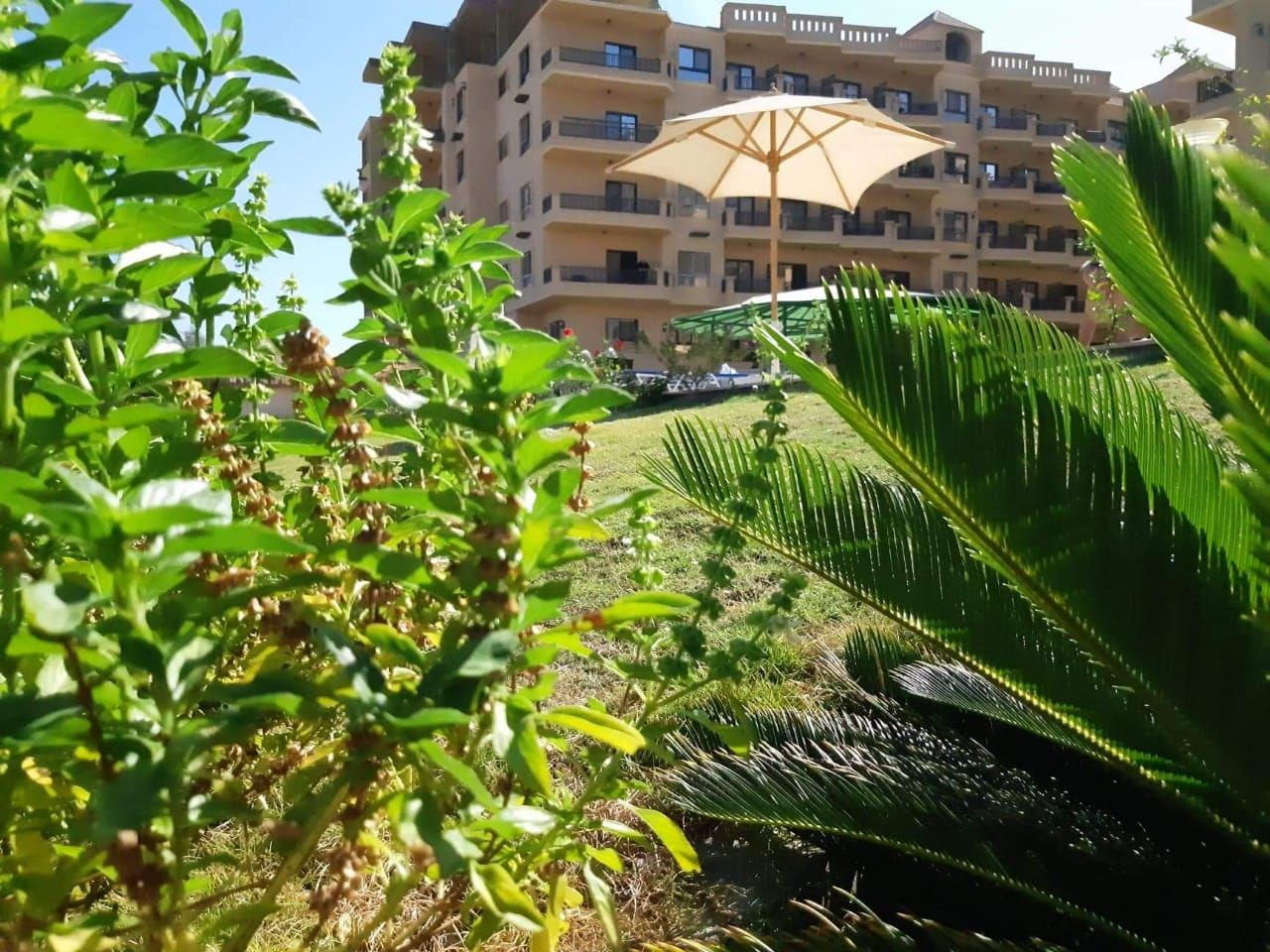 Купить квартиру в египте хургада авито лондон недвижимость